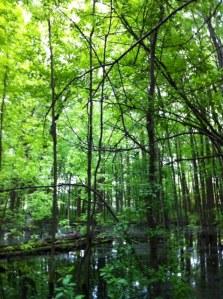 Forêt et marécage urbain