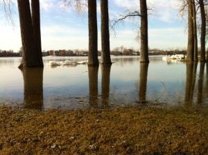 Arbres inondés